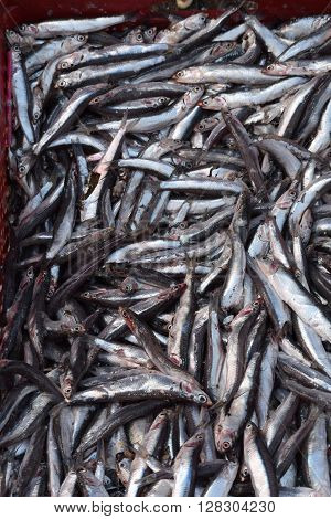 Minnows at the Farmers Market in Chefchaouen Morocco