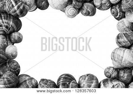 Black and White Snail Shells Frame on white Background