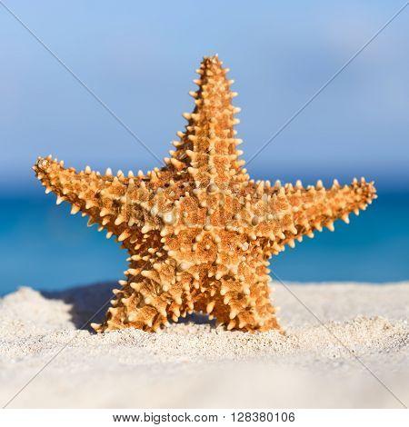 Starfish On Caribbean Sandy Beach