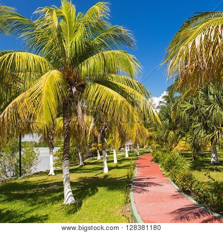 Walking Path With Palm Trees