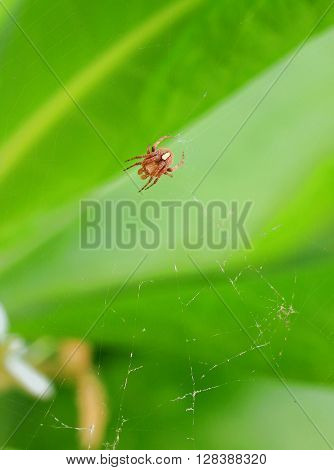 Closed up Spider at Tree for stock photo