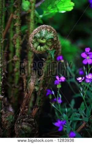Uncurling Fern And Flower
