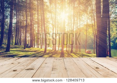 Pine Tree And Wood Table With Sunlight Vintage
