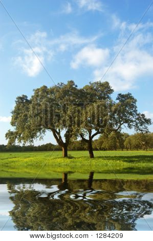 isolated tree in a farm sky with clouds and green grass poster