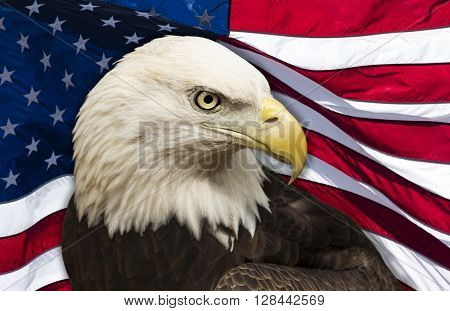 bald eagle against an American flag background