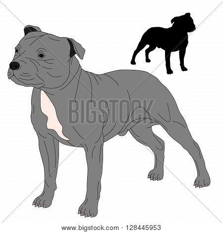 Staffordshire Bull Terrier dog silhouette drawing realistic vector illustration