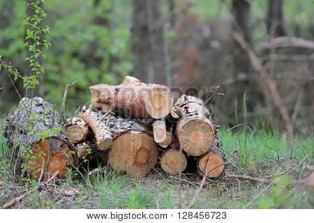 there is a pile of pine logs in-field