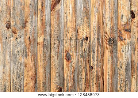 Wall Of Ash Wood Texture Background Macro