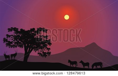 Silhouette of zebra and antelope at tthe afternoon