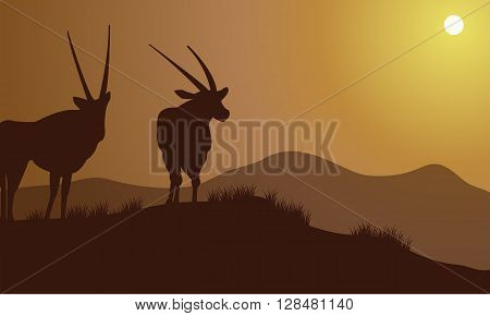 Antelope silhouette on the hills at the afternoon