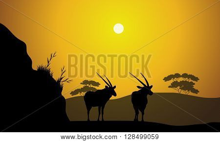 Scenery morning in hill with antelope and yellow backgrounds