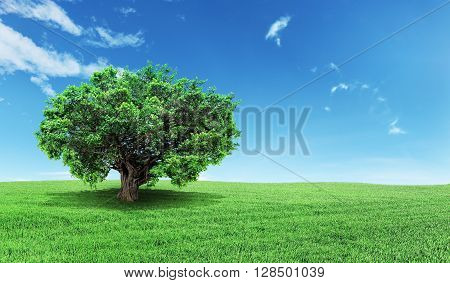 Concept of life. Big alone tree in the field. Tree of life.
