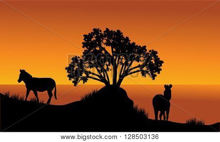 Landscape silhouette of zebra at the morning in the hills