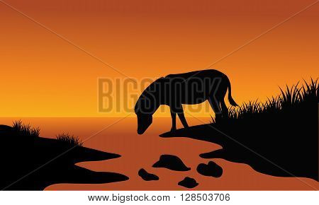 Silhouette of one zebra in riverbank with orange backgrounds