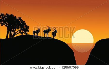 Antelope silhouette on the cliff at the morning