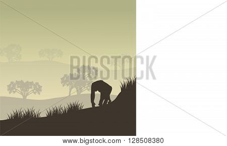 Gorilla group of silhouette in hills with gray backgrounds