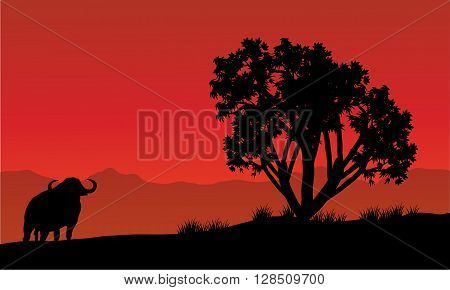 Single bull silhouette in fields with red backgrounds