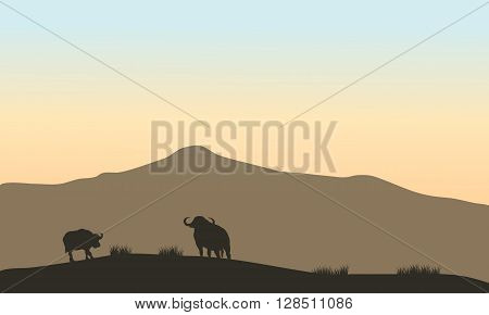 Beautiful silhouette of bull in hill  with mountain backgrounds