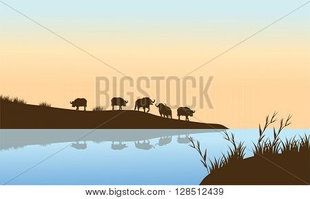 Bison Sunrise on the river a beautiful scenery