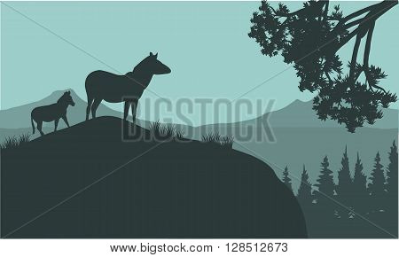 Silhouette of zebra on the hills at the night