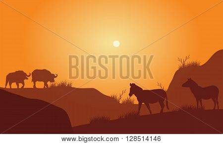 Silhouette of bison and zebra in hills at the afternoon