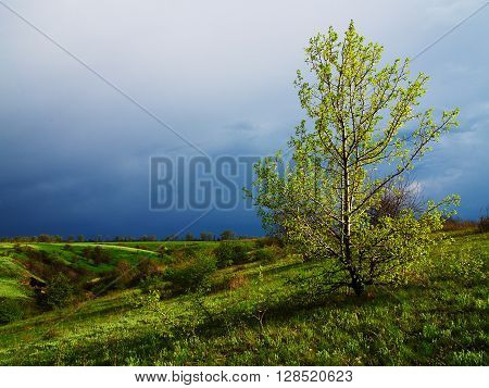 Sunlit young tree at the green field with ravine in the background against the thunder sky