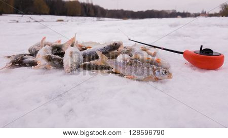 Winter fishing. Ice fishing. Fisherman on ice fishing from the well a special winter fishing rod. Fishing in winter. Active cold fish winter fishing tackle. Sport winter fishing.