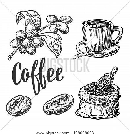 Sack with coffee beans with wooden scoop and beans cup branch with leaf and berry. Hand drawn sketch style. Vintage vector engraving illustration for label web. Isolated on white background.