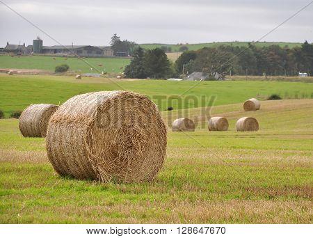 a rolled Hay Bale in a field