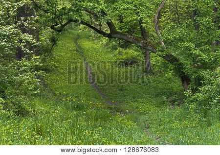 Hiking Path in Park During the Summer