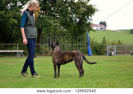 Young dog trainer when training with Herder