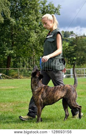 Dog trainer exercising with her dog - in action