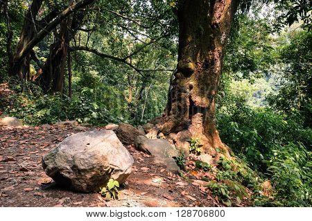 Forest in the mountains of Juayua Ruta de las Flores itinerary El salvador