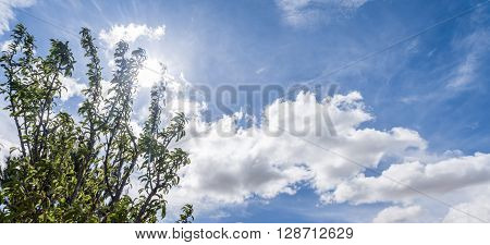 Panoramic Clouds Background