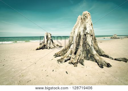 Dead trunks on the beach. Nature conceptual image.