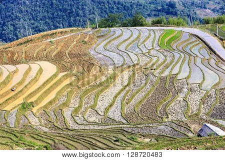 Rice fields at Ha giang province, Vietnam