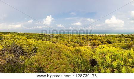 Dunes de La Marina on the coast of Mediterranean sea Costa Blanca Spain