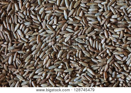 rye grains, rye photo, rye background, dry rye, vegetarian food, organic rye, rye seeds, raw rye, cereal photo