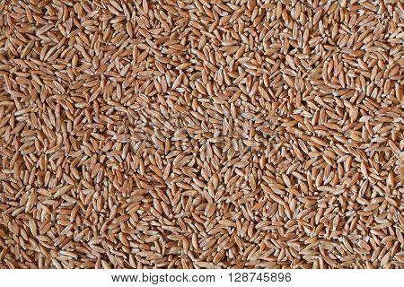 spelt grains, spelt photo, spelt background, raw spelt, dry spelt, natural food, spelt seeds