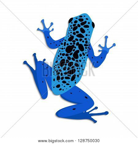 Blue poison dart frog flat design. Vector illustration of blue frog on white background. Poisonous frog. Isolated tree frog dendrobates azureus top view