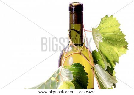 bottle of white wine with vine