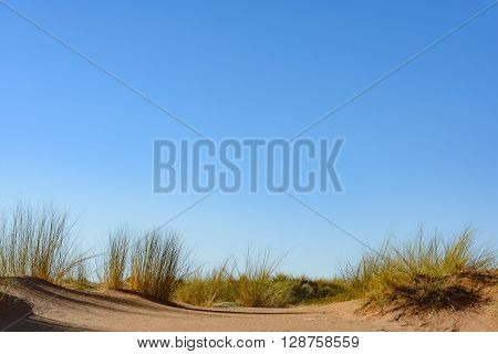 Sand dunes with clear blue sky copyspace