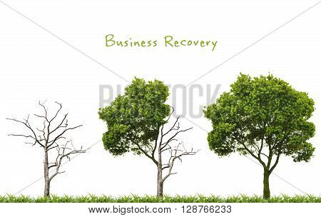 Business recovery concept with return of recovery trees