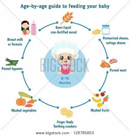 Baby child infographic presentation template with baby food. Age - by- age guide to feeding your baby: 8-10 Months.