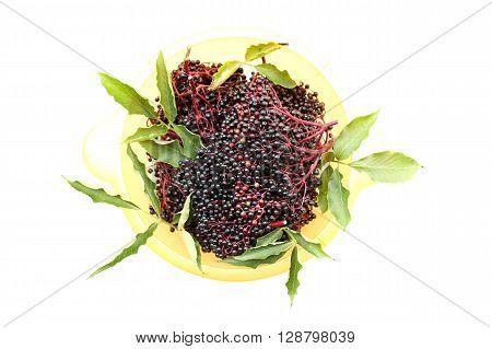 A photo of some juicy elder Berries