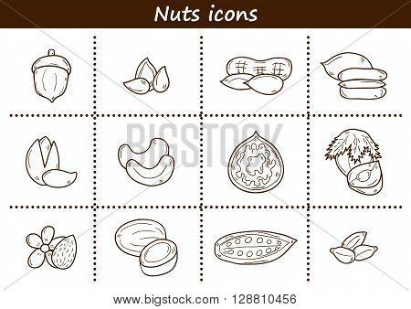 Set of cartoon hand drawn objects on nuts theme: hazelnut pumpkin and sunflower seeds peanut pecan pistachio cashew walnut acorn almond coconut cocoa. Raw healthy food concept