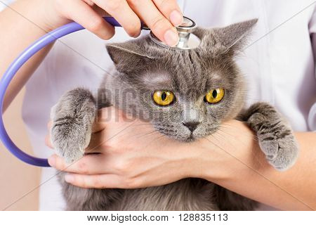 The doctor white coat with stetoscope holding a cat