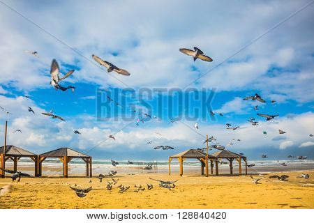 The windy January day in the Mediterranean. Flock of pigeons noisy flying away from the sandy beach