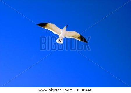 Close Up Of Seagull Flying