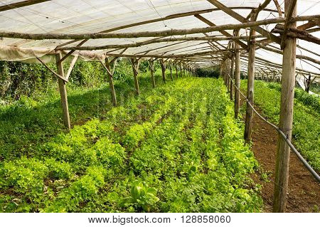 Young Plants Growing In A Very Simple Plant Nursery Greenhouse
